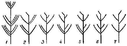 Схема свободно стоящих деревьев