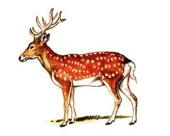 Красная книга: Животные красной книги, охрана природы